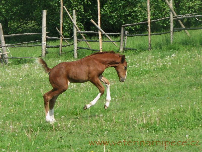 http://www.veterinarnipece.cz/images/big/fotky/hribata-3.jpg